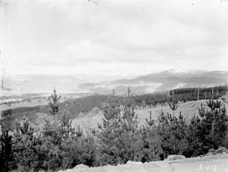 Mount Stromlo Pine plantation looking towards the Brindabellas.