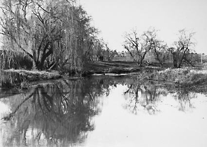 Molonglo River,Winter Scene