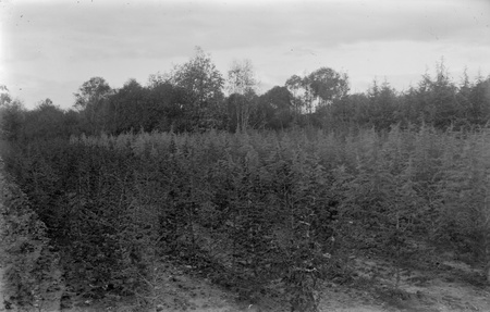 Yarralumla Nursery production areas