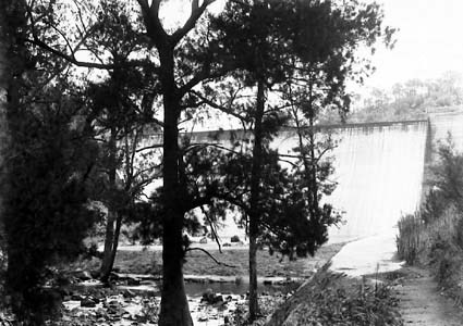 Cotter Dam wall and stilling pond  - River Oak trees in front