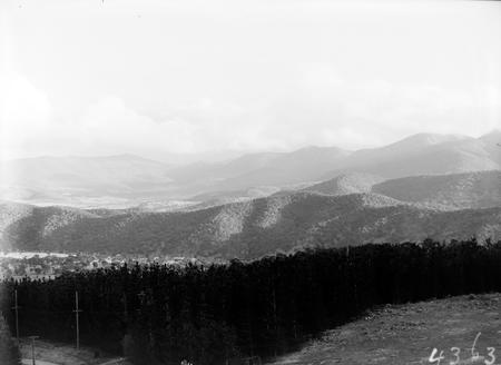 Pine plantations.