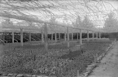 Shade house in Yarralumla Nursery