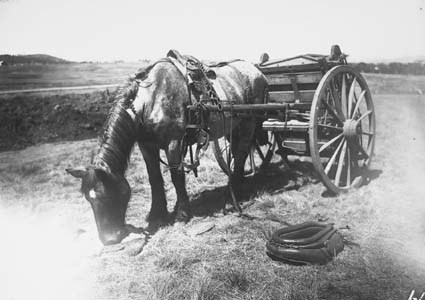 Dray with horse feeding from nose bag - Collar and hames on the ground