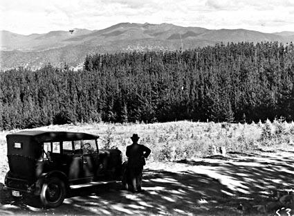 Pine plantation near Mt. Stromlo