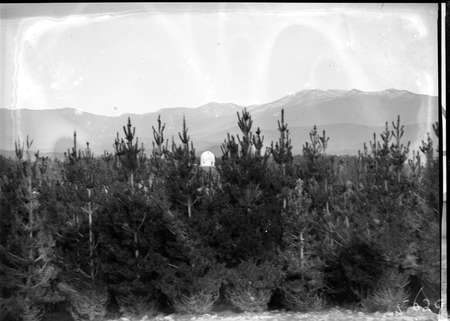 Pine plantation and distant view of 30 inch Reynolds Telescope on Mt Stromlo.