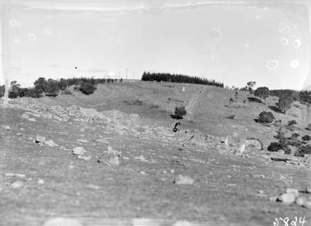 Mt Stromlo hillside, with pine forests in background.