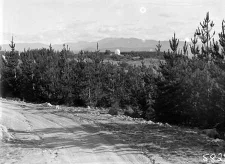 Pine Plantation, Mt Stromlo, with thirty inch Reynolds Telescope in background.