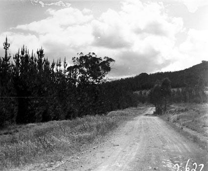 Road through pine plantations, Mount Stromlo
