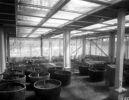 Interior of Insectarium , CSIR Laboratories,Clunies Ross Street, Black Mountain