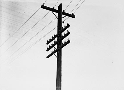 Power transmission lines and telephone lines