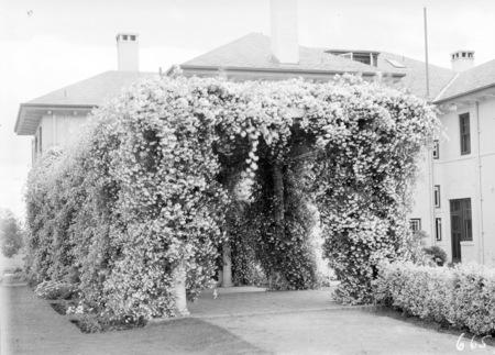 Pergola at Prime Ministers Lodge, Adelaide Avenue, Deakin.