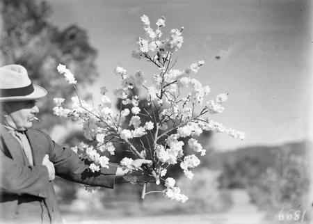 Man admiring a spray of blossom.
