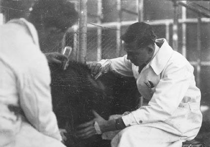 Animal under treatment