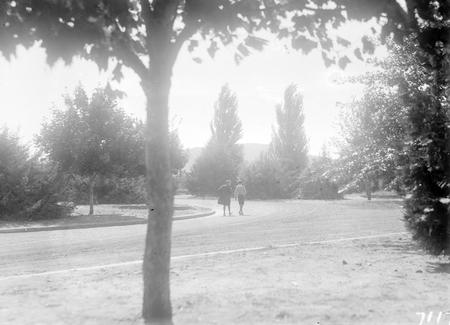 Street scene, Davey Crescent, Forrest.