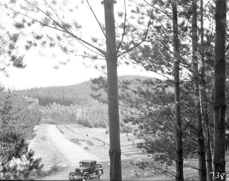 Pine plantation and track with utility truck.
