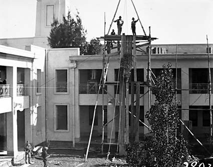 Pot plants being hoisted on to the roof of Parliament House with block and tackle